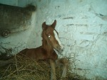 Our only foal