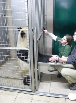 Vienna Zoo Practice | Vets into the Wild