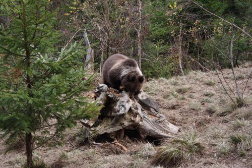 Bear0002